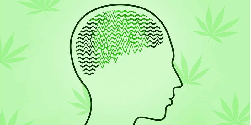 epilepsia-aceitecbd.xyz