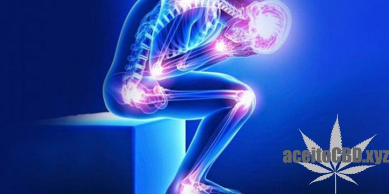 cbd para fibromialgia-aceitecbd.xyz